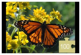 butterfly 100